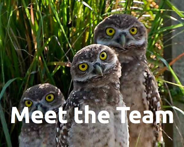 Team Owls Detail